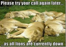 lions down